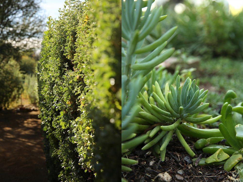 Creamy mascarpone, pesto and aubergine bake at Rietfontein Private Nature Reserve... Part 1 of 3 (3/6)