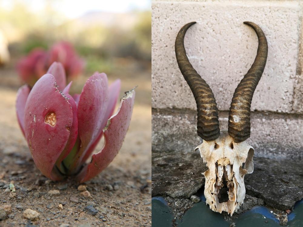 Creamy mascarpone, pesto and aubergine bake at Rietfontein Private Nature Reserve... Part 1 of 3 (2/6)